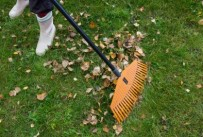 Leaves are Falling: Things to consider when raking them up.